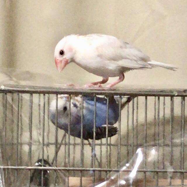 鳥病院に行ってきました。