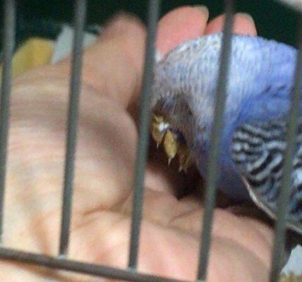 大きな鳥かごはまだ怖い藍緒さん