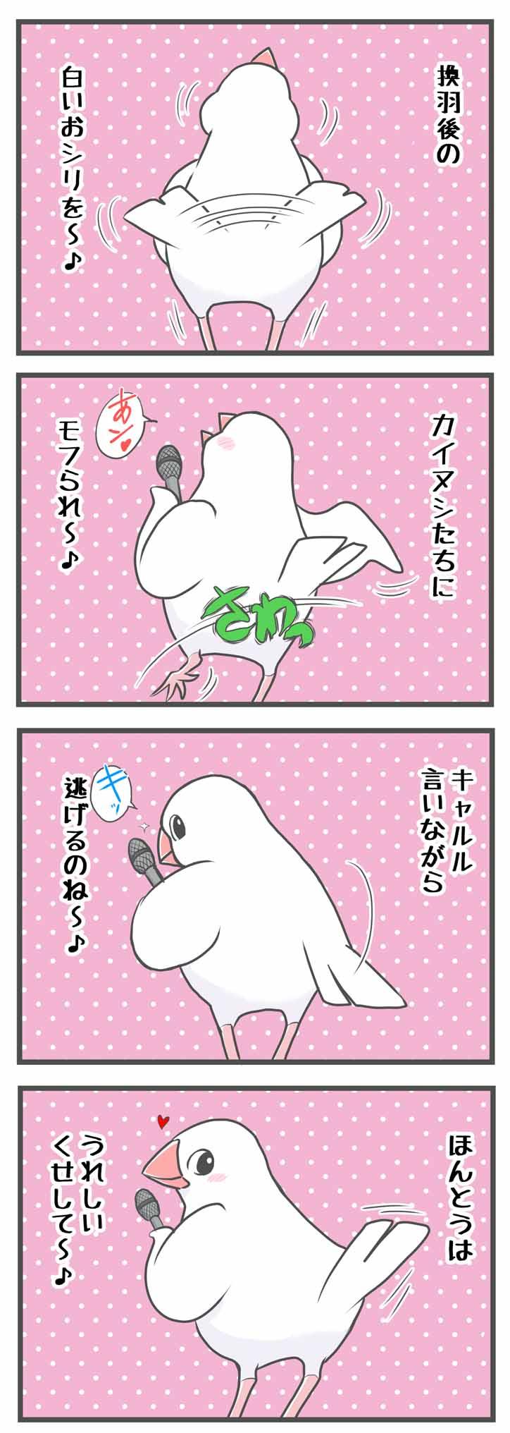 文鳥 buncho かわいい ひな 成鳥 birb