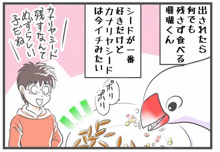 文鳥 かわいい 鳥漫画 カナリヤシード
