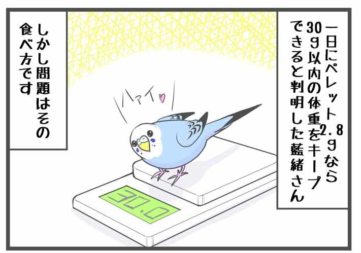 "alt=""可愛い小鳥がダイエットをがんばる漫画"""