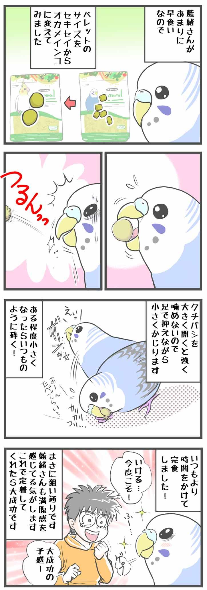 """alt=""""かわいいセキセイインコのダイエット騒動"""""""