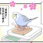 """alt=""""芸に目覚めたセキセイインコ"""""""