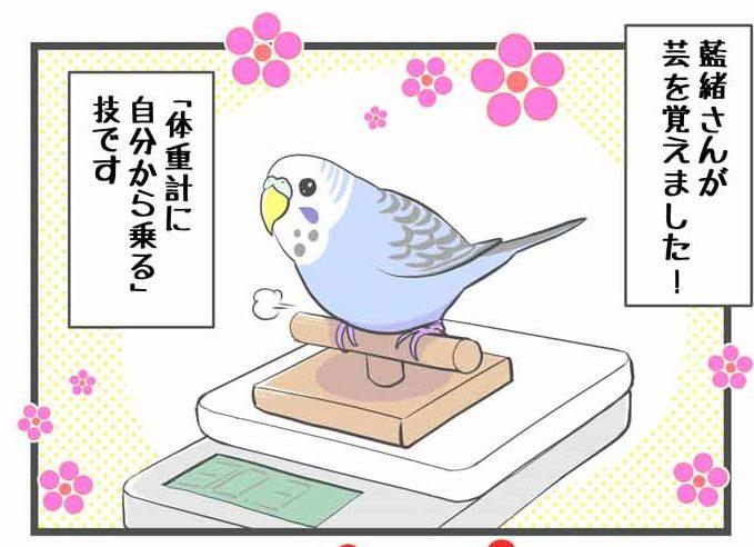 藍緒さん、女芸人になる
