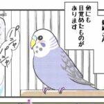 """alt=""""鳥にも人間にもモテモテ白文鳥"""""""