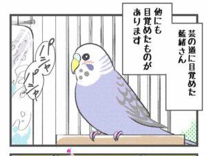 鳥にも人間にもモテモテ白文鳥