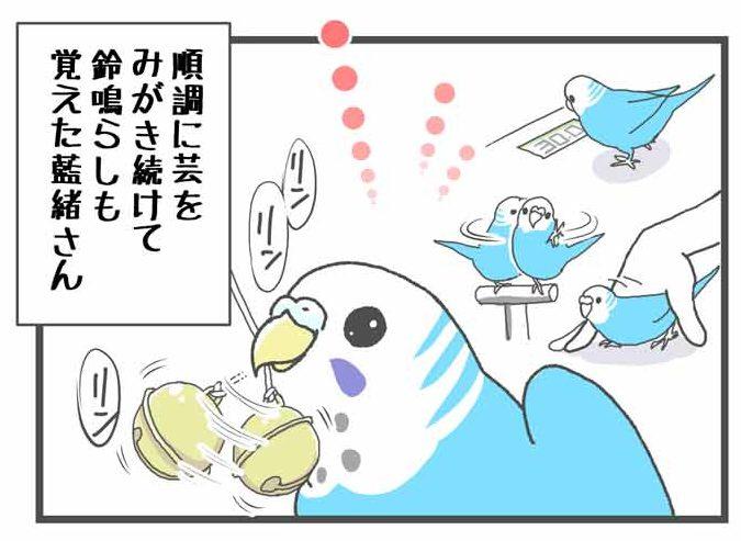 """alt=""""鈴を鳴らす芸をするセキセイインコ"""""""