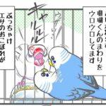 """alt=""""文鳥に恋するセキセイインコ"""""""