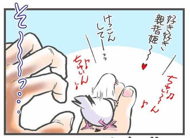 飼い主の親指を守る文鳥