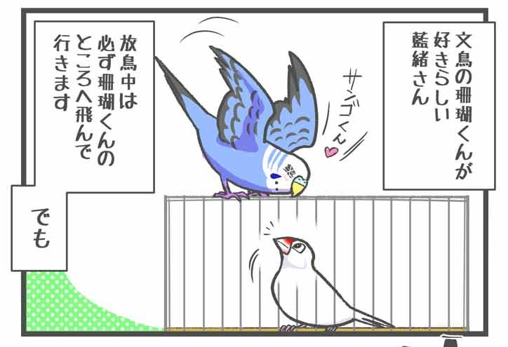 文鳥に恋するセキセイインコ