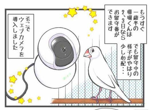 鳥さん用ウェブカメラを導入しました!