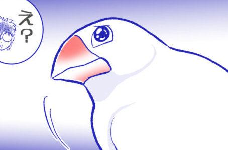 控えめに感情を表すかわいい文鳥