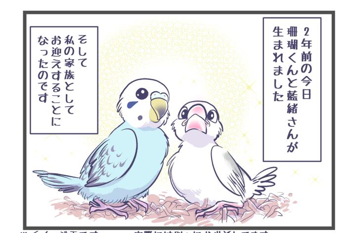 珊瑚くん&藍緒さん、2歳の誕生日おめでとう