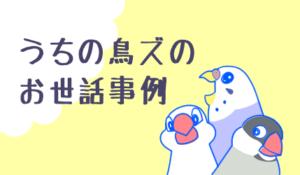うちの鳥たちのお世話事例